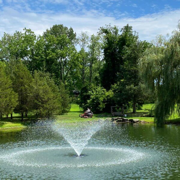 Pond and Water Feature Maintenance