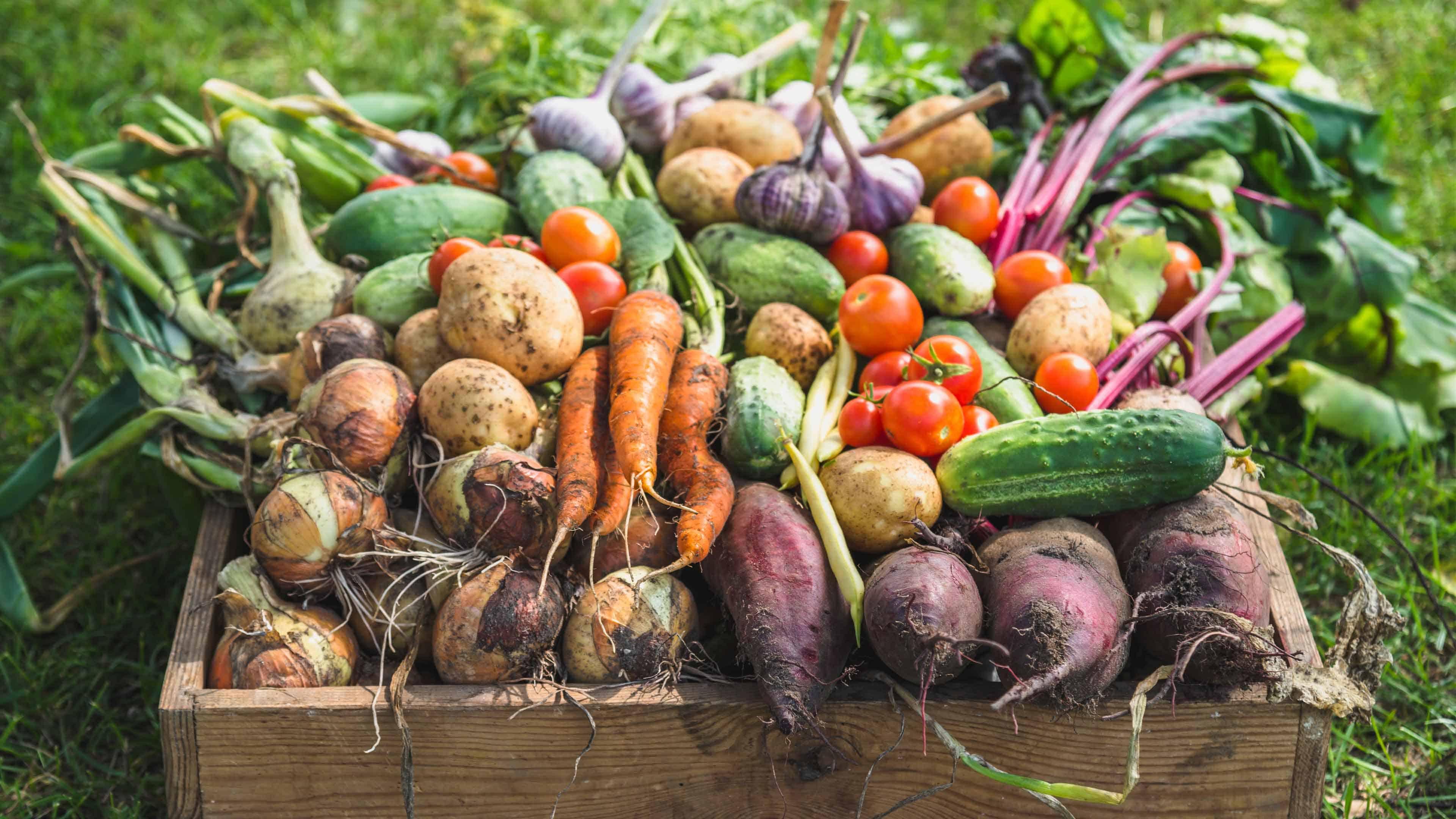 Fall Garden Harvest Recipes