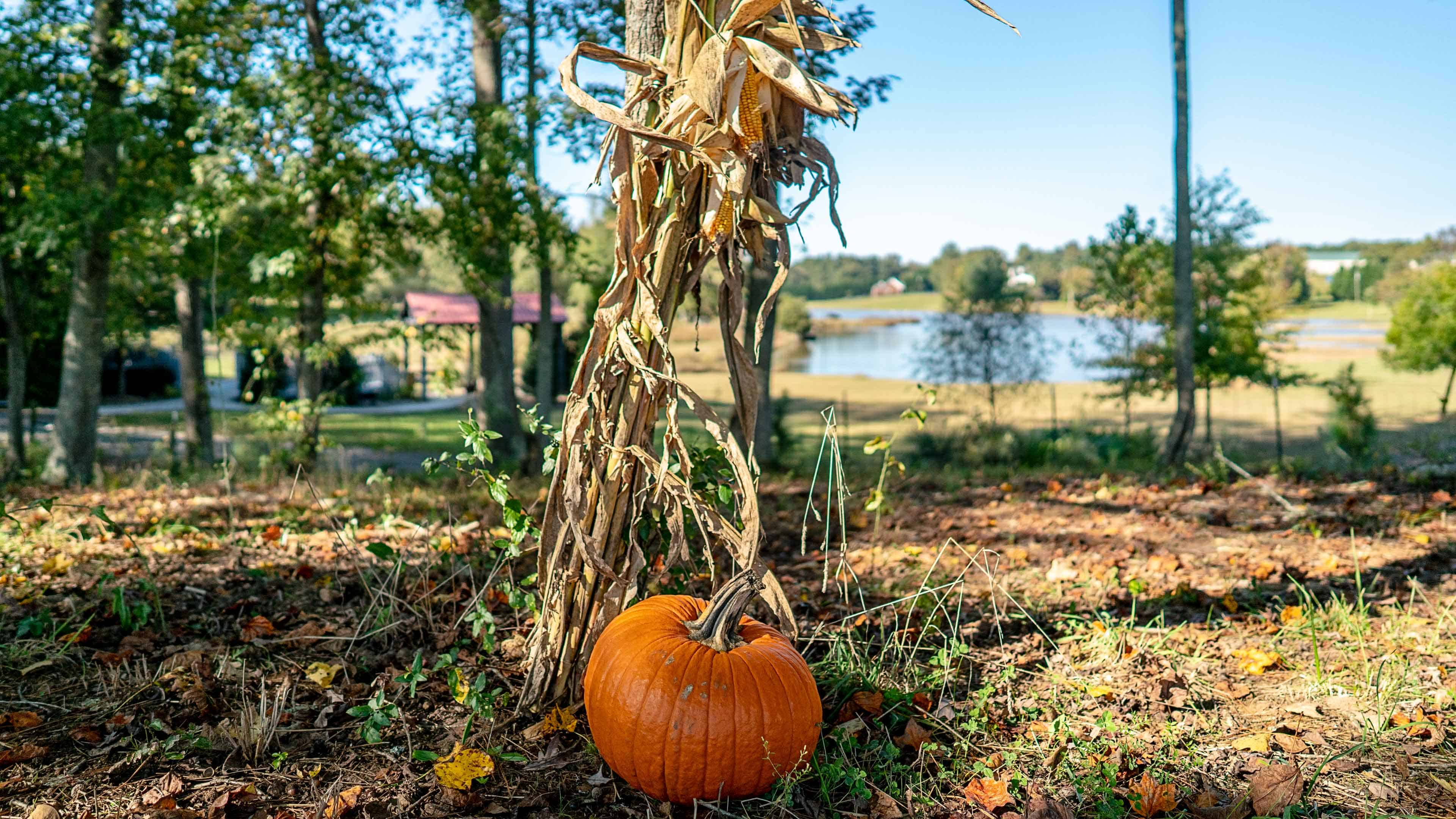 rural families' Halloween activities are a little different than families whol live in town.
