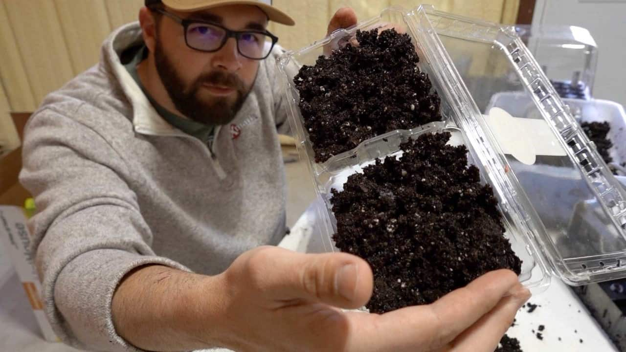 Get Started with Early Spring Seeds