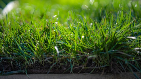 Grass 101
