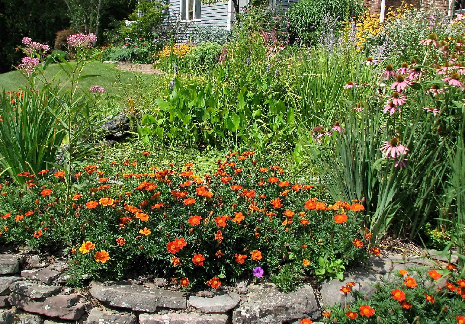 Attract butterflies to your yard with plants.