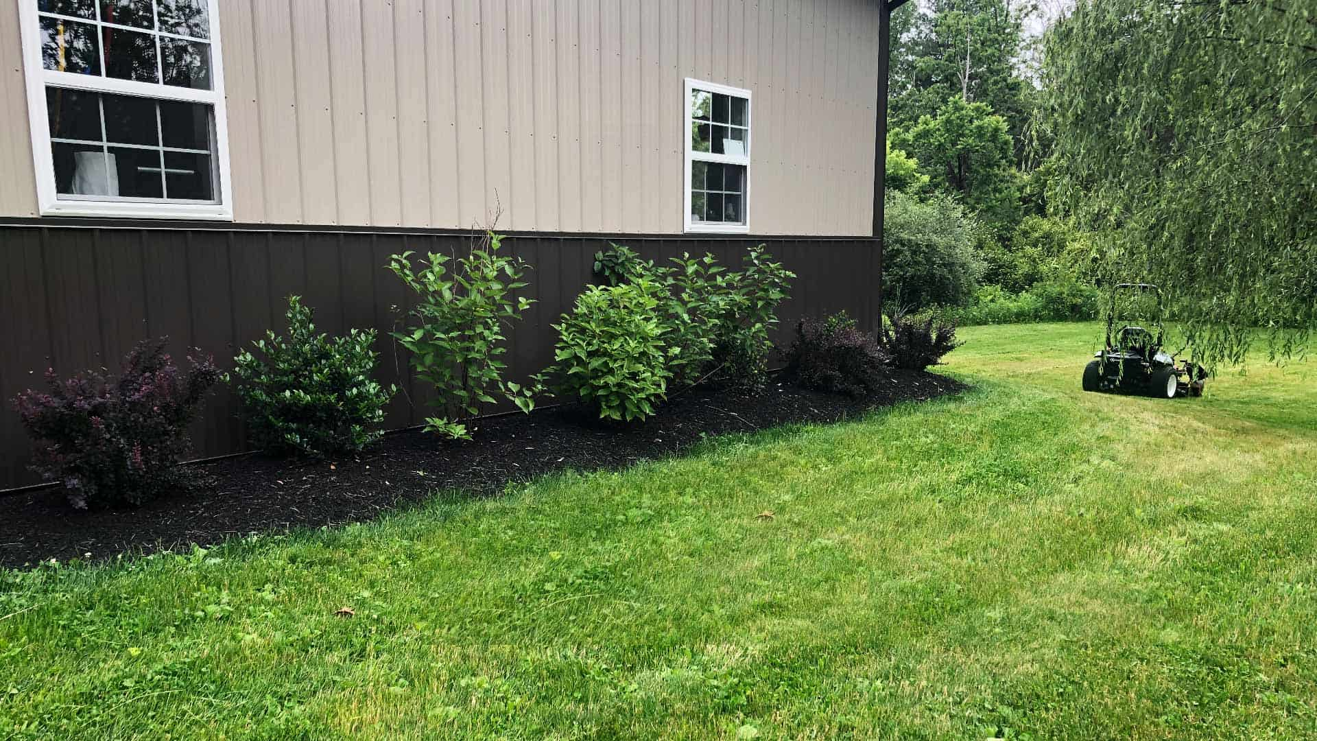 Understanding the importance of managing invasive plants in your yard.